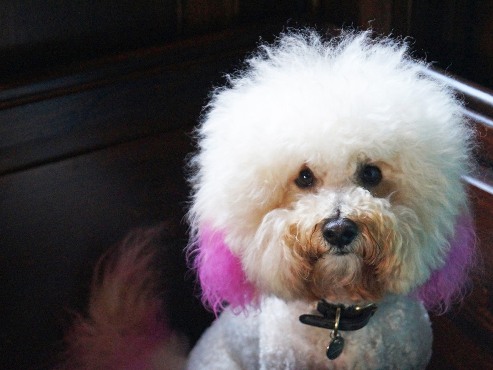 Meet Orbi, one of our most fashionable regulars.